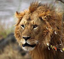 IN THE WILD WITH LIONS by Carole-Anne
