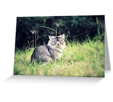 Wild and Free - 'Odie' the cat Greeting Card