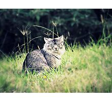 Wild and Free - 'Odie' the cat Photographic Print