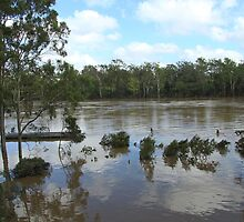 2011 South-East Queensland Floods by Tim Harper