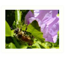 Another Flower...Another Load of Pollen Art Print