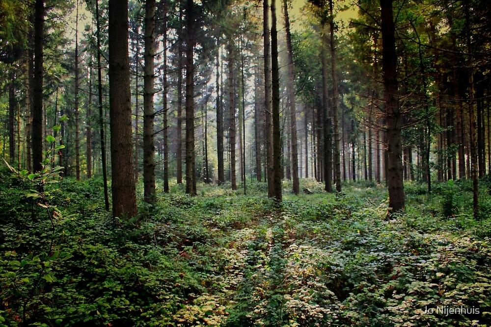 Forest Light by Jo Nijenhuis