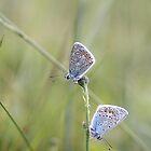 Double Blue by Alison Finch