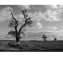 Three gnarled trees in Nowton Photographic Print