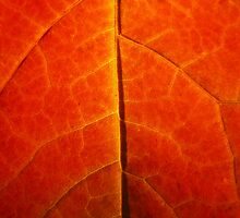 Autumnal Veins by Sarah J Lindley