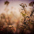 springtime  by Elizabeth Pellette