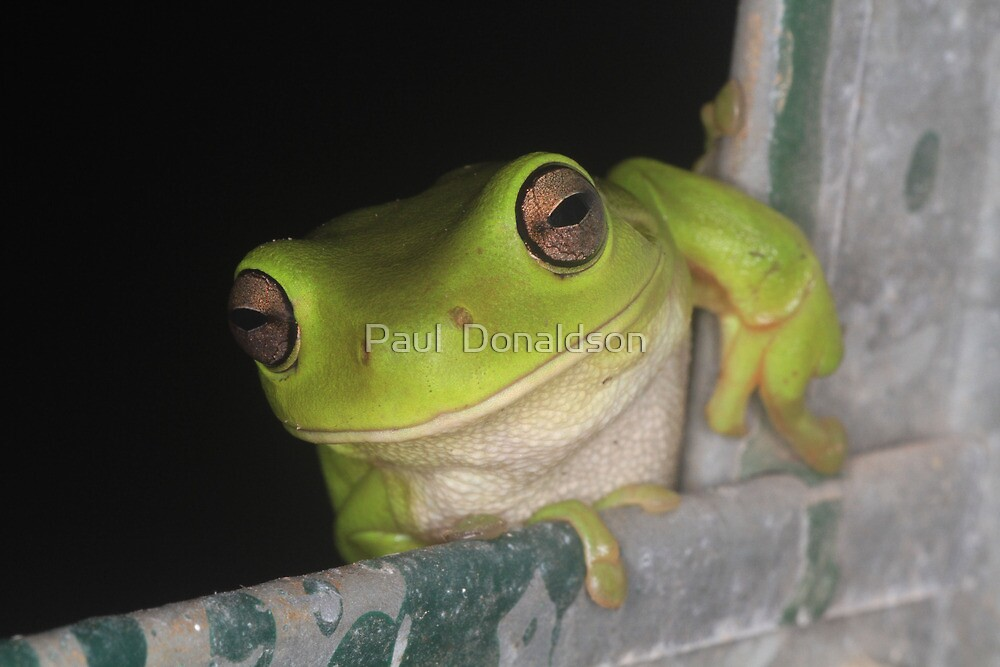 Frog Eyes by Paul  Donaldson