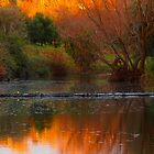 Autumn Weir by Dave Callaway