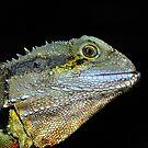 """ Water Dragon Lizard  Marlo Vic. "" by helmutk"