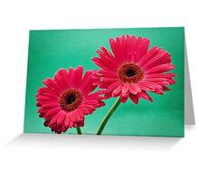 Gerberas Greeting Card