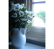 Daisies in the window Photographic Print
