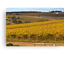 Autumn Vineyard - May 2011 Canvas Print