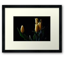 Yellow tulip in black background  Framed Print