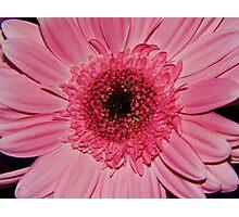 Neon Pink Photographic Print