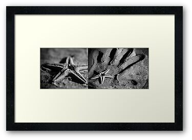Starfish in my Hand by Maliha Rao