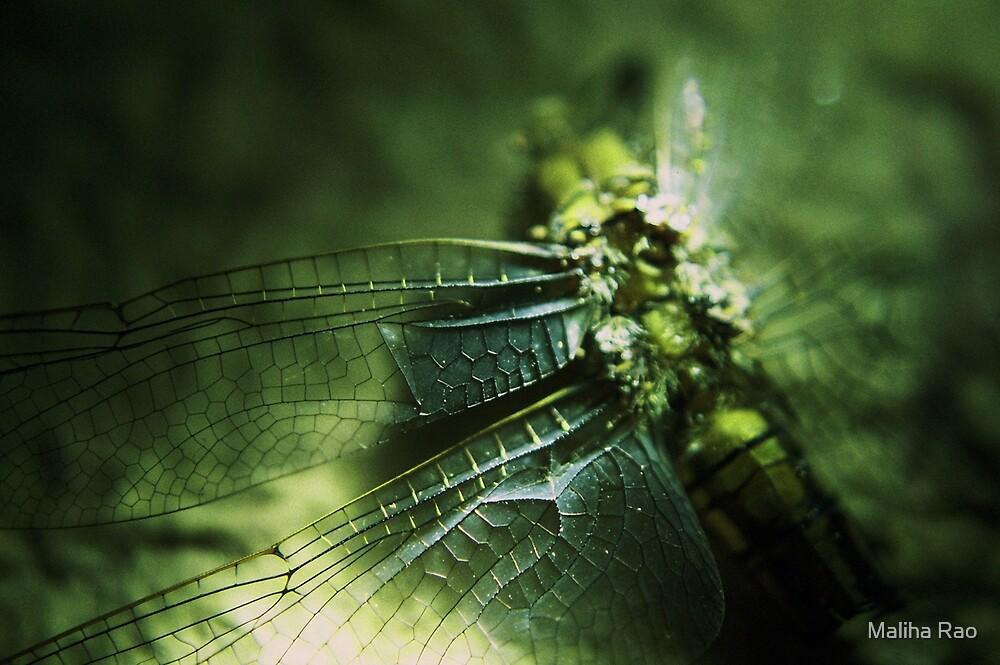 Beauty in the Breakdown - Green by Maliha Rao