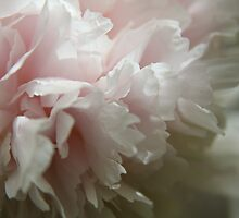 Soft Pink...... by LynnEngland