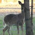 Oh Deer! They Can See Me by MaeBelle
