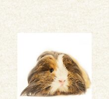Cute Sheltie Long Hair Guinea Pig photo print Hoodie