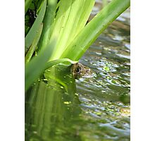 Frog in a pond Photographic Print