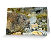 Wild Marmot Greeting Card