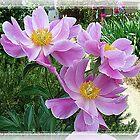 Pink For Cancer Awareness by Darlene Bayne