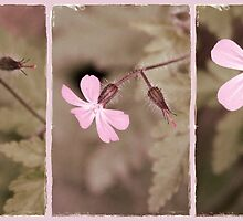 Pale Pink Triptych by Julesrules