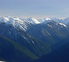 Spring at Hurricane Ridge by mrscaer