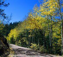 Phantom Canyon Glorious Fall by Margot Ardourel