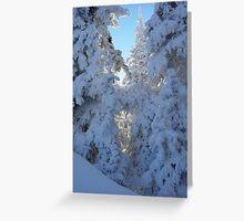 Sunlight behind Winter Trees at Hurricane Ridge Greeting Card