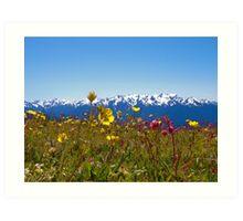 Flowers versus Mountains at Hurricane Ridge Art Print