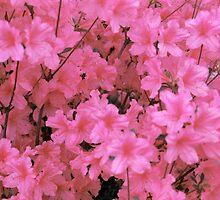 PinkAzalea by EMBlairArtwork