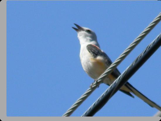 Sing- Along Closeup by Navigator