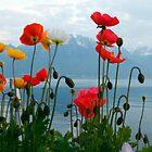 lake geneva spring time by milena boeva