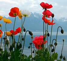 lake geneva spring time by milena boeva