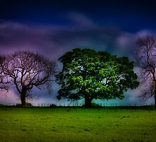 A colourful line of trees by Shienna