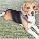 Beagle Portrait by Nicole Zeug
