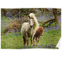 Pony and Foal on Dartmoor Poster