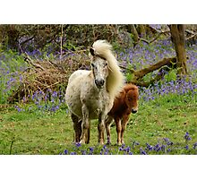 Pony and Foal on Dartmoor Photographic Print