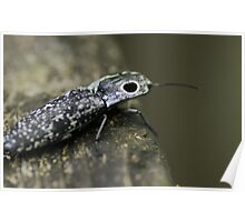 Macro Black and White Beetle Poster