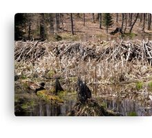 Beaver Dam - Gatineau Park,  Quebec, Canada Canvas Print