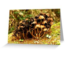 Fascinating Fungi Greeting Card