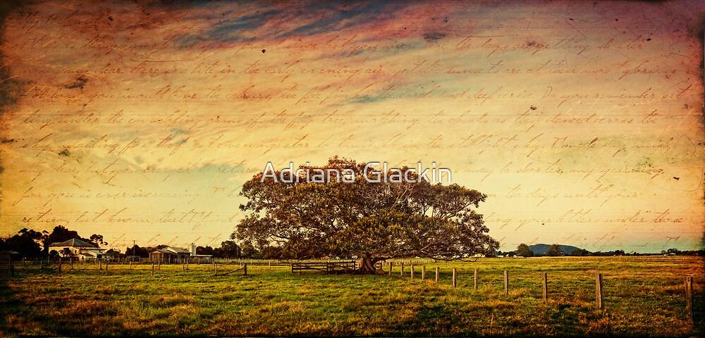 ~ the fig tree ~ by Adriana Glackin