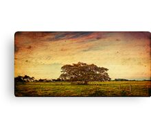 ~ the fig tree ~ Canvas Print