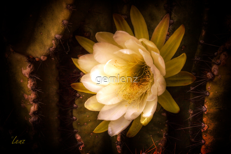 Cactus Floral by George Lenz