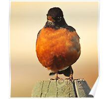 Fat Robin, Montana photo Donna Ridgway Poster