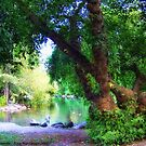 Woodland Park Pond by rocamiadesign