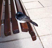 Bus Stop Bird by Robert Phillips