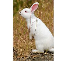 White Wabbit Photographic Print