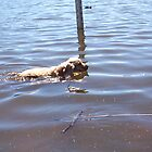 Dog Swimming by Robert Phillips
